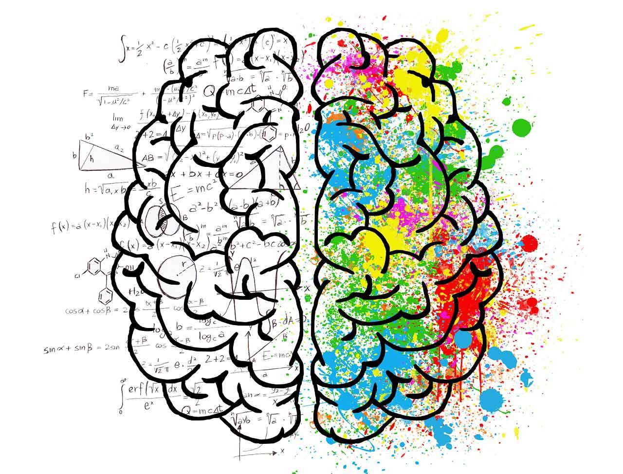 bagian organ dalam otak dan fungsinya - posciety