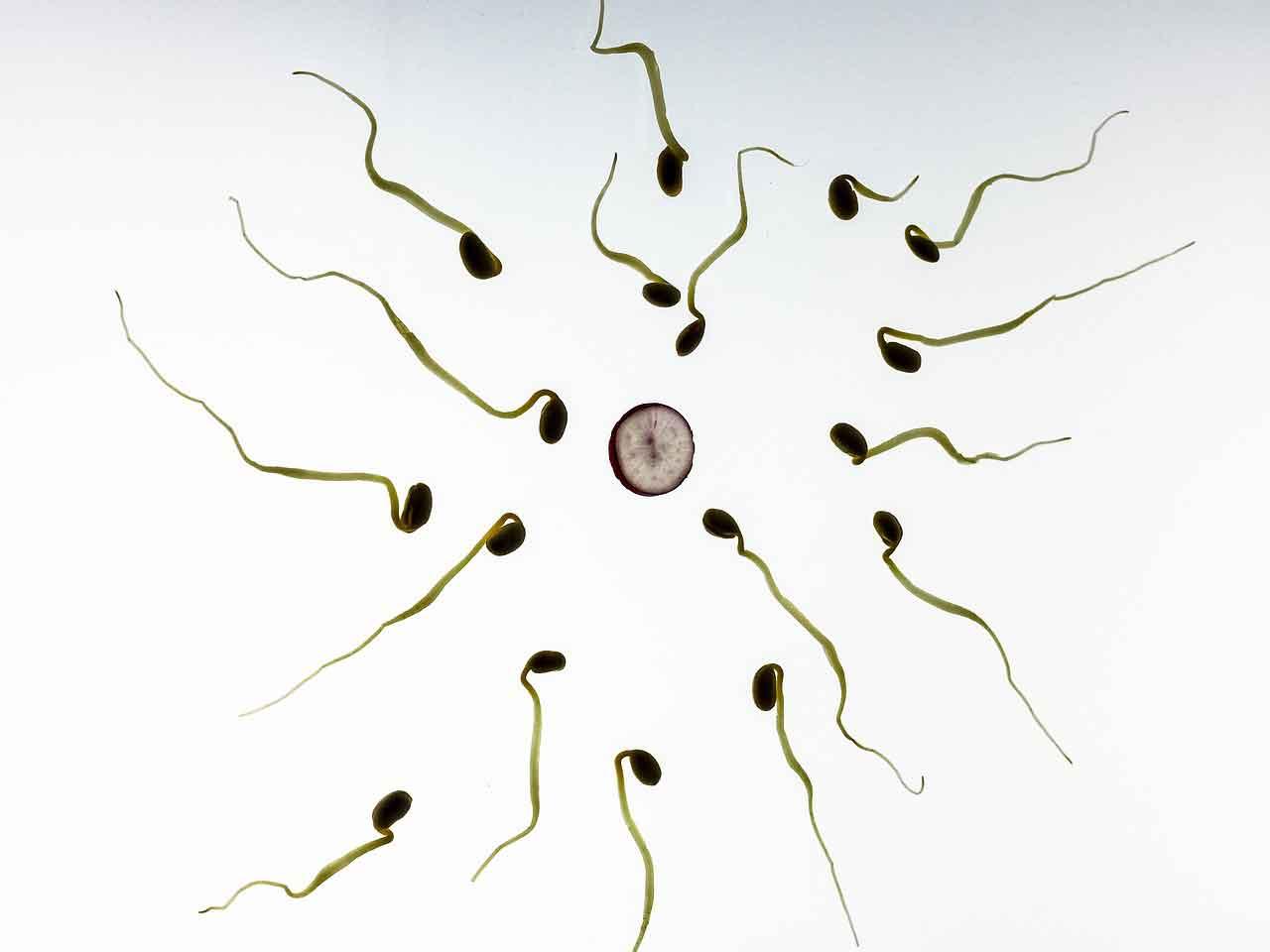 kualitas sperma baik dan buruk - posciety