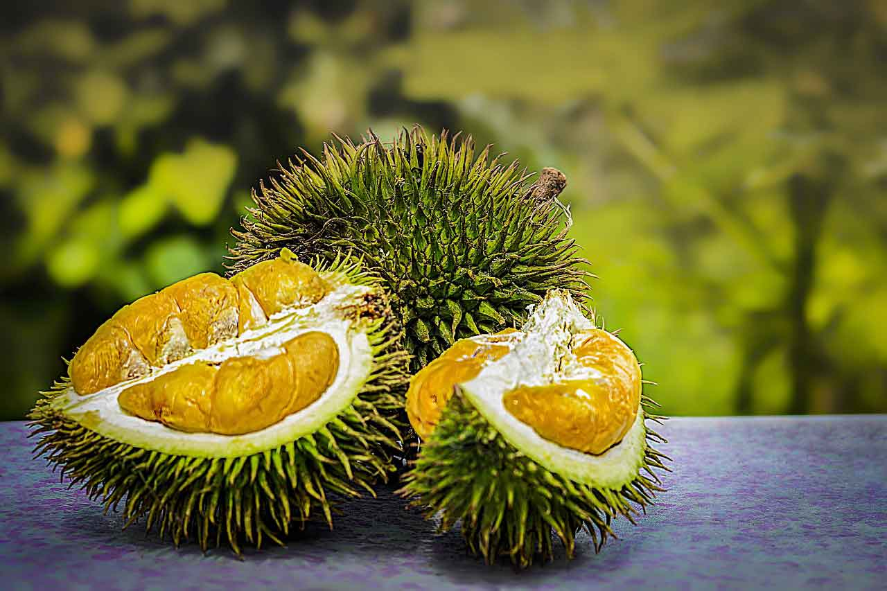 manfaat dan efek samping buah durian - posciety