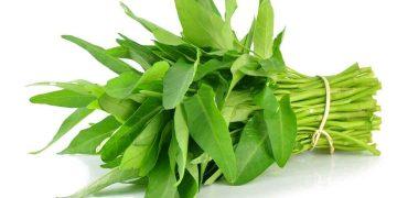 manfaat sayur kankung bagi tubuh - posciety