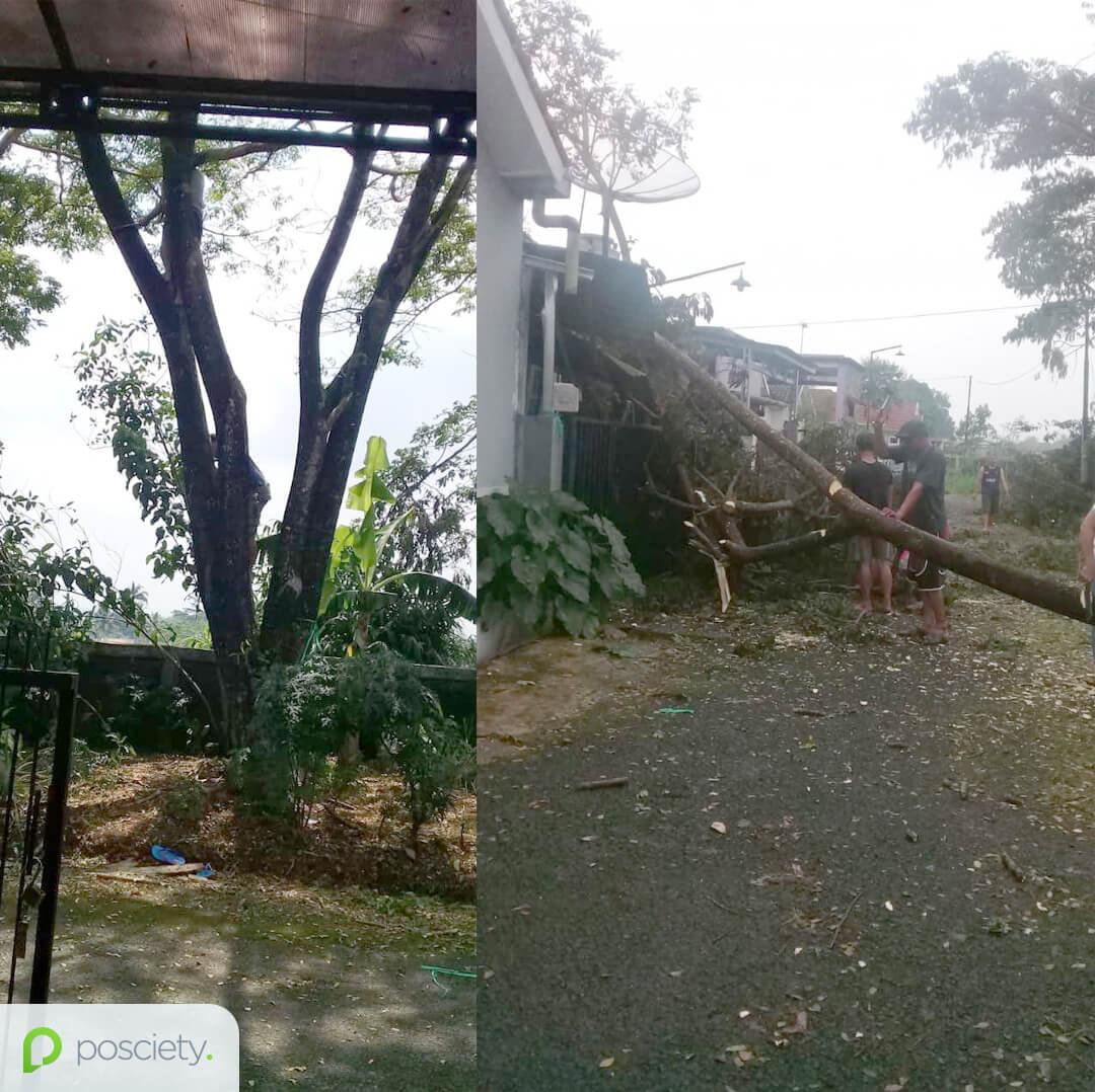 pohon tumbang di sukabumi perumahan - posciety