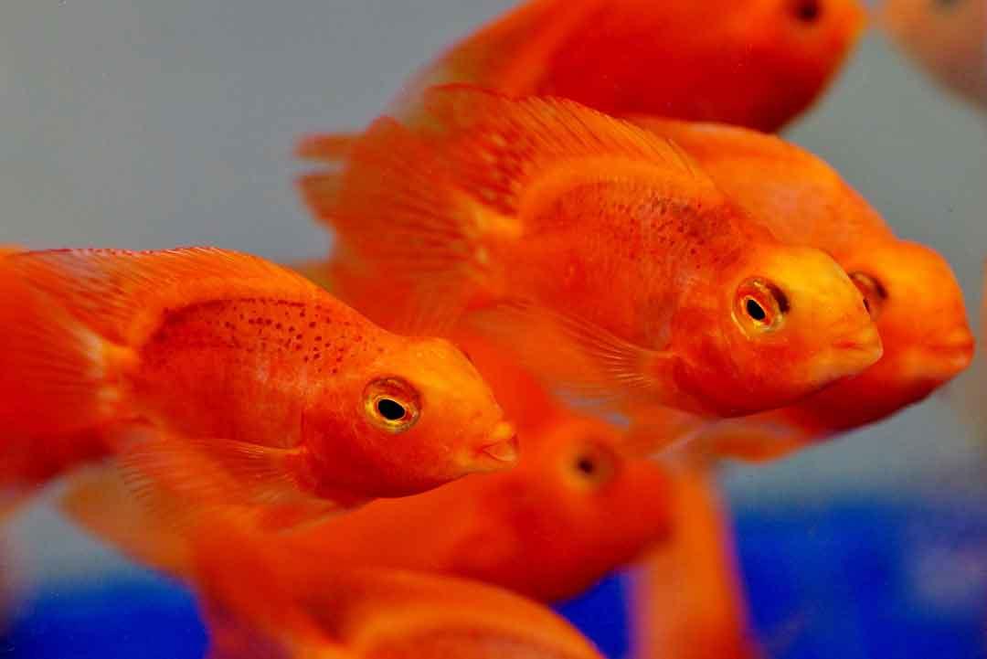 sistem peradaran darah ikan berfungsi - posciety